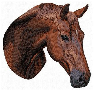 Andalusian Horse -OD1