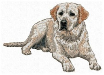 Labrador Retriever - DD131