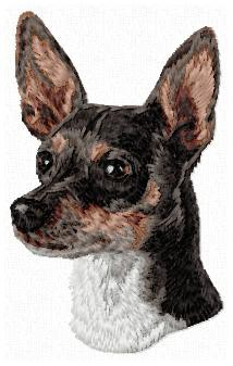Rat Terrier - DD134