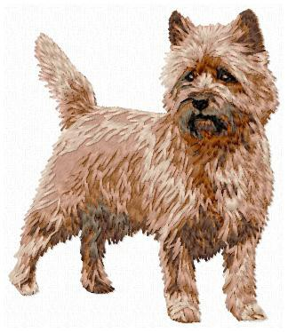 Cairn Terrier - DD155