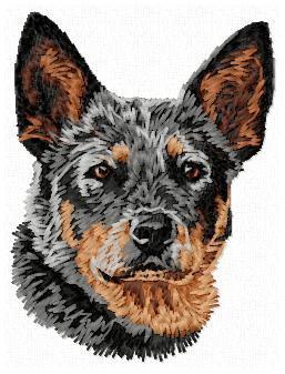 Australian Cattle Dog -DD156