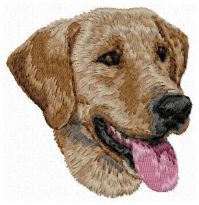 Field Labrador Retriever - DD158