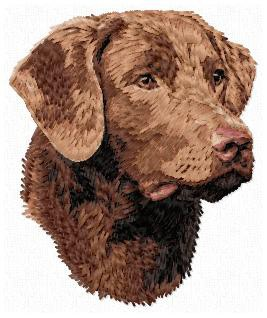 Chesapeake Bay  Retriever - DD159