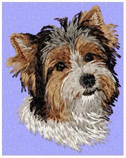 Yorkshire Terrier (Parti) - DD163