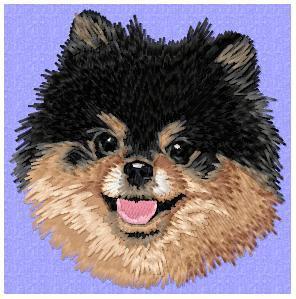 Pomeranian - DD175