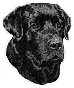 Labrador Retriever - DD58
