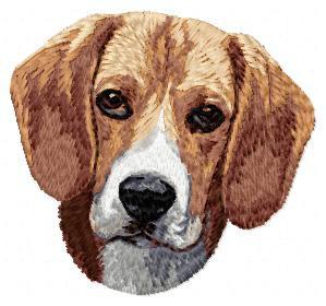 Beagle - DD5