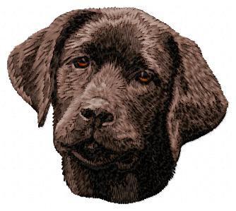 Labrador Retriever - DD60
