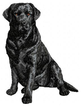 Labrador Retriever - DD61