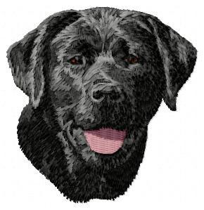 Labrador Retriever - DD62