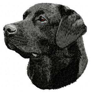 Labrador Retriever - DD63