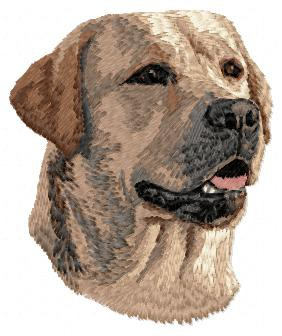 Labrador Retriever - DD64
