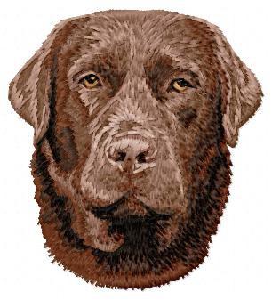 Labrador Retriever - DD65