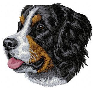 Bernese Mountain Dog - DD6