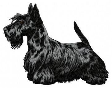 Scottish Terrier - DD85