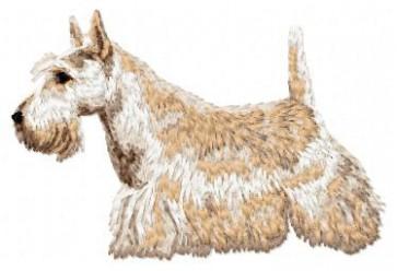 Scottish Terrier - DD86