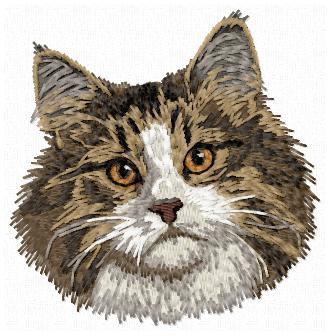 Norwegian Forest Cat -CD8