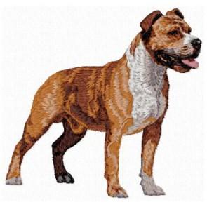 American Staffordshire Terrier - DD142