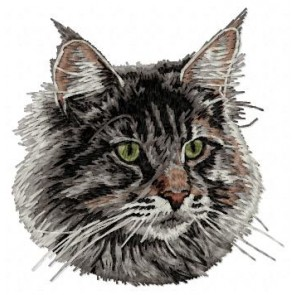 Maine Coon - CD2