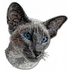 Siamese Cat - CD4