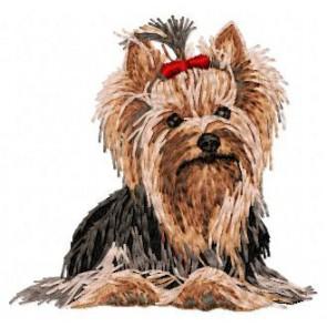 Yorkshire Terrier - DD100