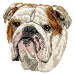 English Bulldog - DD122