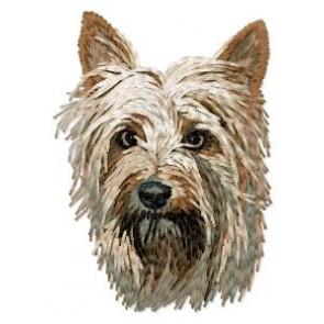 Australian Silky Terrier - DD125