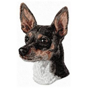 Rat Terrier - DD134