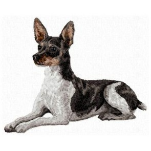 Rat Terrier - DD135