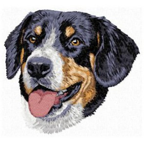 Entlebucher Mountain Dog - DD136