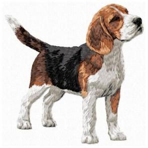 Beagle - DD150