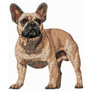 French Bulldog - DD168