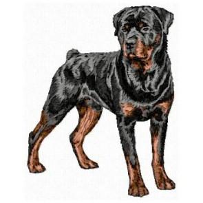 Rottweiler - DD169