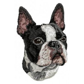 Boston Terrier - DD16