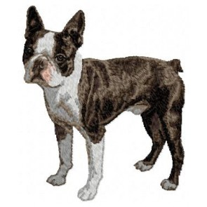 Boston Terrier - DD17