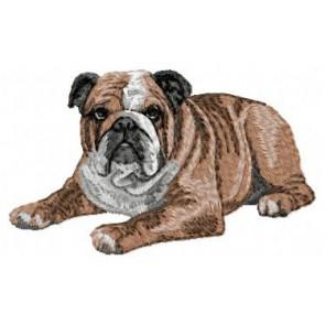 English Bulldog - DD23