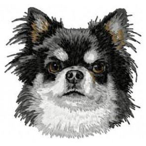 Chihuahua - DD27