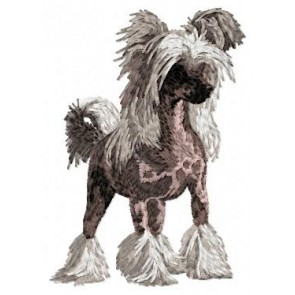 Chinese Crested Dog - DD30
