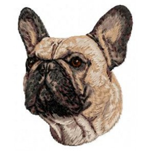 French Bulldog - DD41