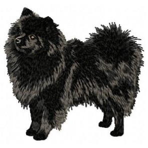German Spitz - DD45