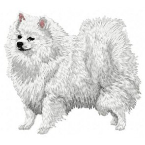 German Spitz -DD46