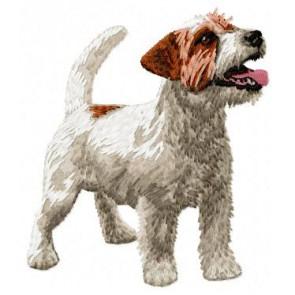 Jack Russell Terrier - DD57