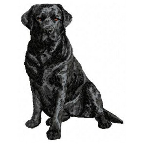 Labrador Retriever - DD61