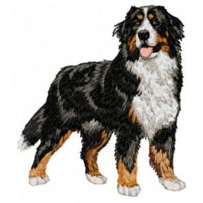 Bernese Mountain Dog - DD7