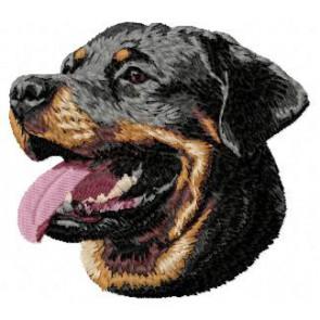 Rottweiler - DD84
