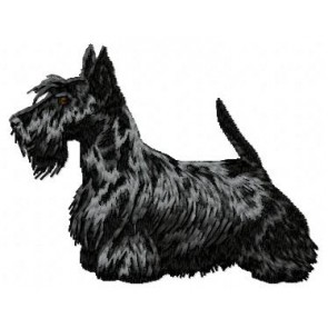 Scottish Terrier - DD85