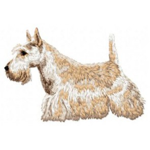 Scottish Terrier - DD86