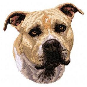 Staffordshire Bull Terrier - DD91