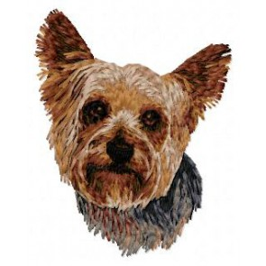 Yorkshire Terrier - DD96