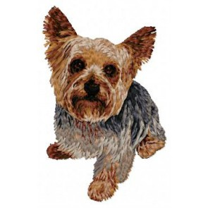 Yorkshire Terrier - DD97